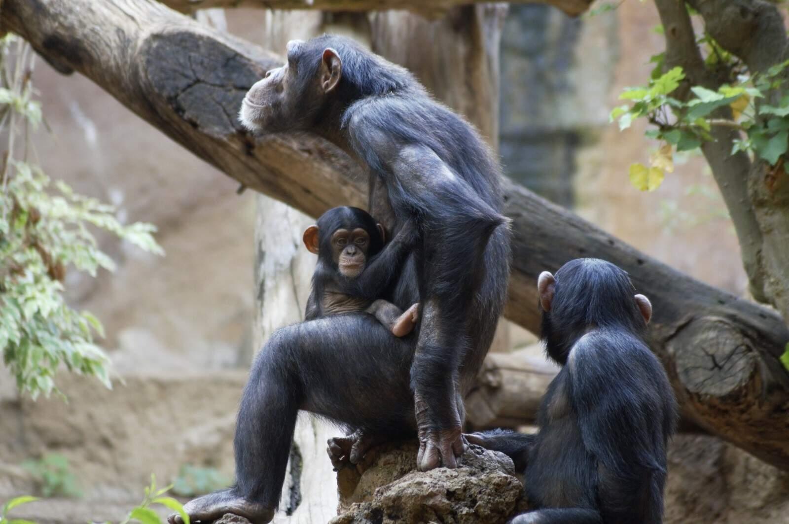 Donkey Kong Country: Tropical Freeze Gewinnspiel Beispielfoto