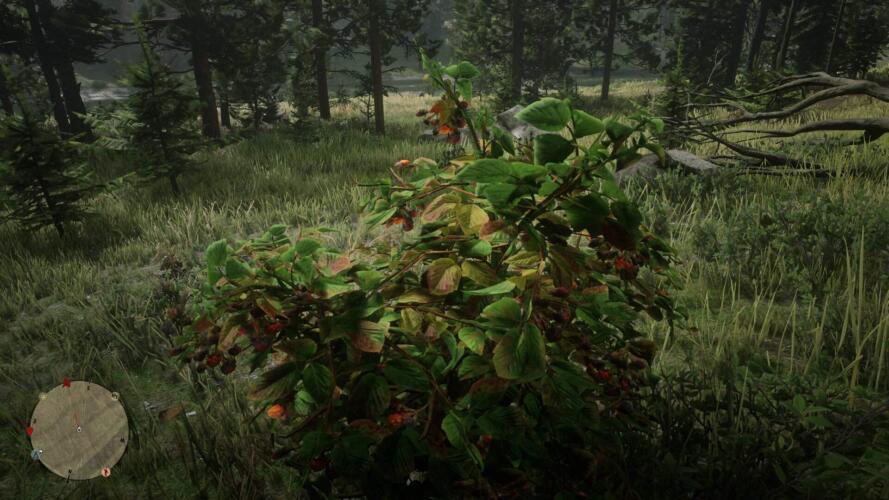 red_dead_online_brombeeren_sammeln